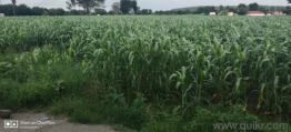 Agricultural land for Sale in Hyderabad | Buy Agricultural